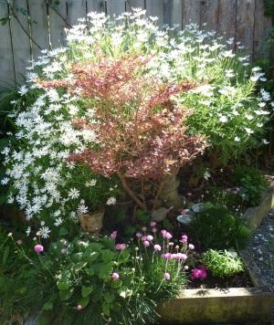 Blüten Garten