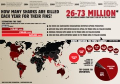 SOSF-sharkfinning_infographic