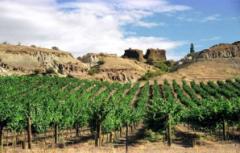 central otago wine