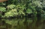 In einem stillen Seitenarm auf der Waiatoto River Safari