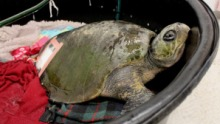 turtle wgtn