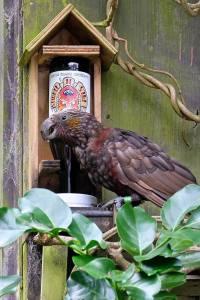 kaka drink fountain