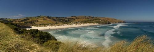 dunedin beach2
