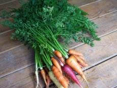 carrots-wm