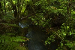 Coromandel_Forest By JShook