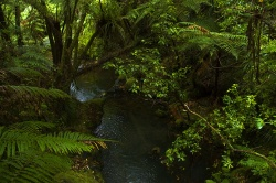 Coromandel_Forest By JShook
