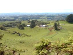 Farming_Country_In_Waitomo_Area