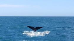 whale-kaikoura