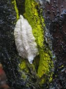 800px-egg_case_in_lichen-encrusted_crack